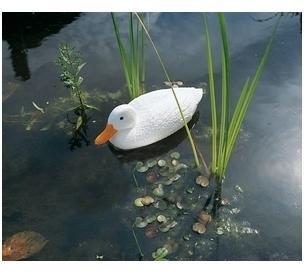 Canard sauvage blanc 38 5