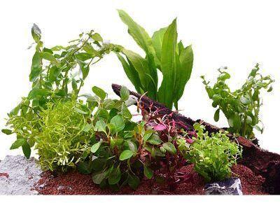 Lot de plantes pour aquarium