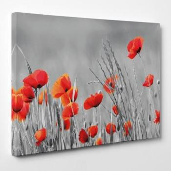 Tableau toile - Coquelicots