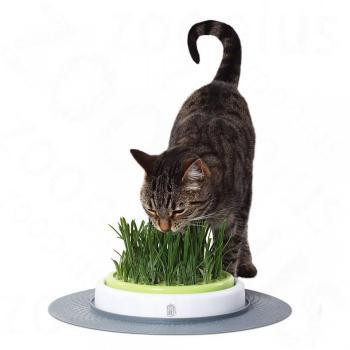 Jardin d herbe à chat Catit