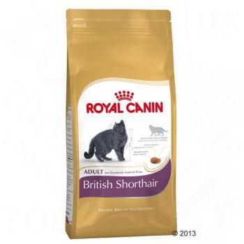 2kg British Shorthair Royal