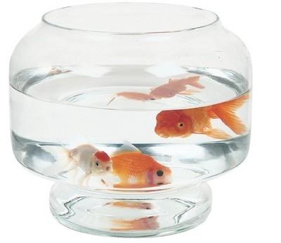 Recherche aquarium du guide et comparateur d 39 achat for Achat aquarium rond