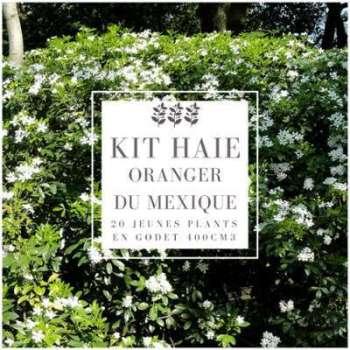 Kit Haie Oranger Du Mexique