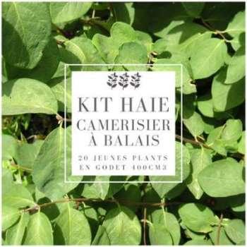 Kit Haie Camerisier à balais