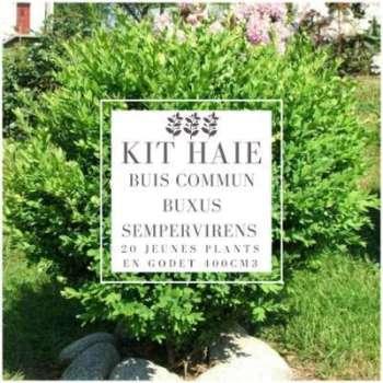 Kit Haie Buis Commun (Buxus