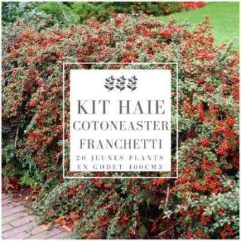 Kit Haie Cotoneaster (Cotoneaster