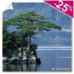 Pin rouge du Japon Pinus densiflora