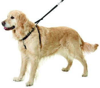 Harnais d éducation pour chiens