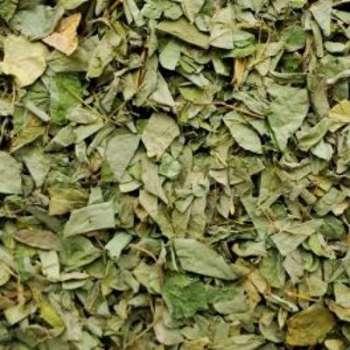 Recherche plante du guide et comparateur d 39 achat for Nettoyer feuilles plantes