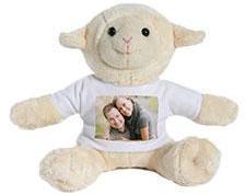 Mouton avec t-shirt photo