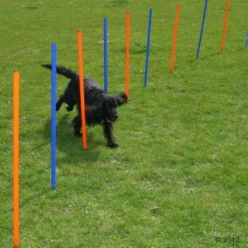 Kit slalom Agility pour chien