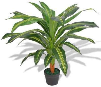 Catgorie fleurs du guide et comparateur d 39 achat for Plante 90 cm