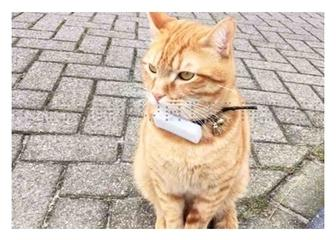 Tracker GPS Weenect pour chats