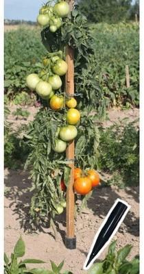 Piquet de tomates en bois