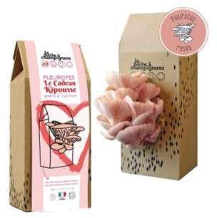 Boîte à champignons prêts