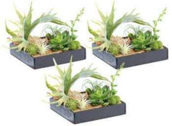 3 tableaux végétaux avec cadre