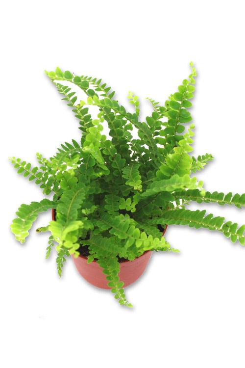 Recherche plante du guide et comparateur d 39 achat for Recherche plante