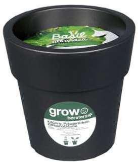 Kit basilic à faire pousser