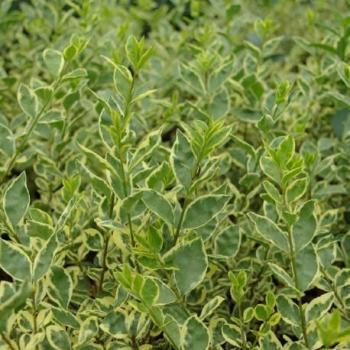 Catgorie plante dextrieur page 5 du guide et comparateur d for Achat plante jardin