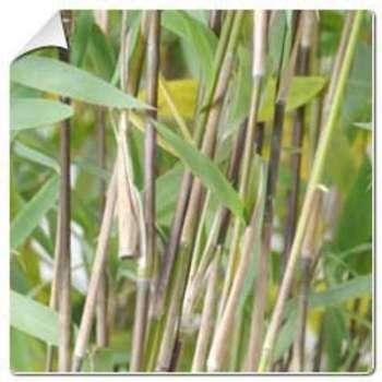 Catgorie plante dextrieur page 1 du guide et comparateur d for Plante bambou exterieur prix
