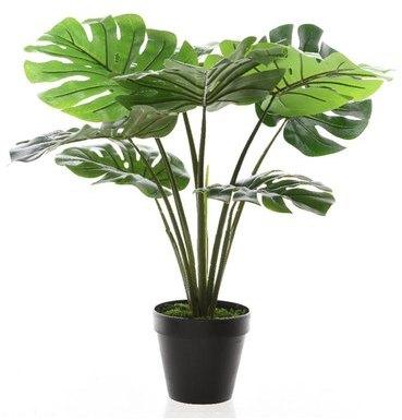 Recherche plante du guide et comparateur d 39 achat for Plante 60 cm