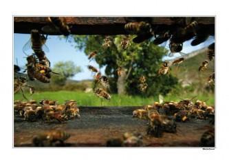 Poster L envol de la ruche