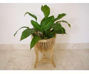 Sellette pour plantes en forme