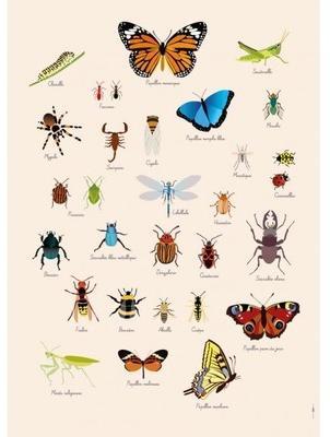 Poster Géant plastifié Insectes
