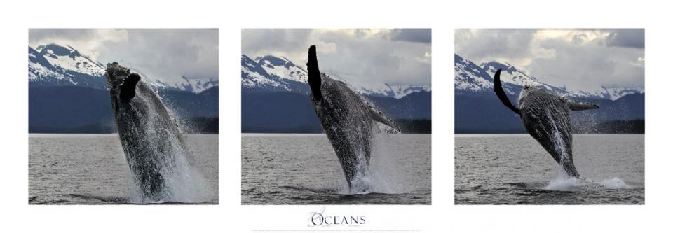 Affiche saut de baleine à