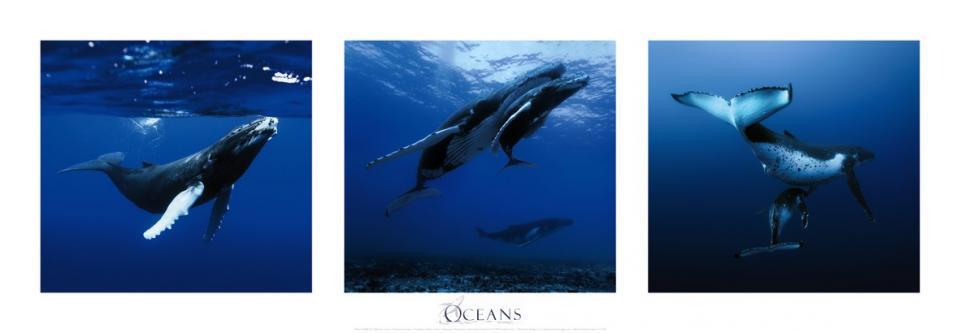 Affiche baleines à bosse Polynésie