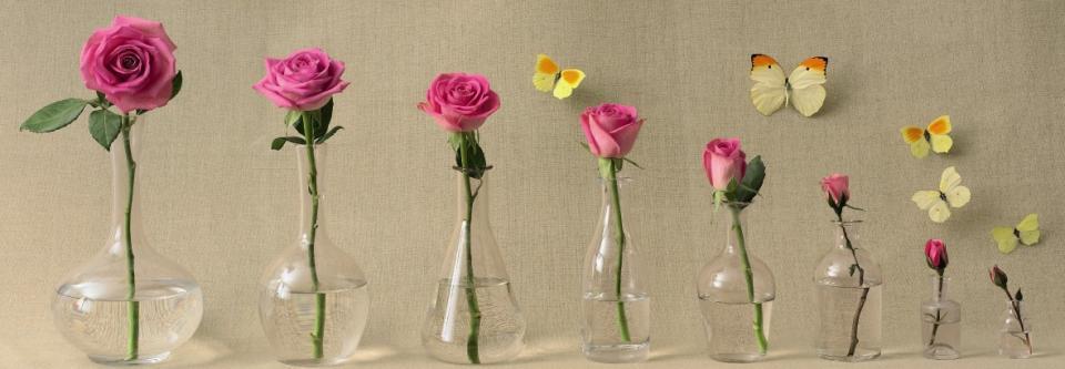 Affiche Une rose au fil du