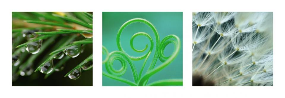 Affiche Nature en vert