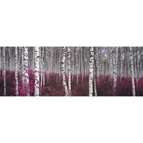Affiche forêt de bouleaux