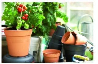 Pot 11cm Green Basics Elho