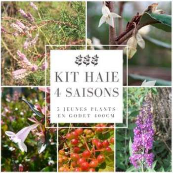 Kit Haie 4 saisons - 5 Jeunes
