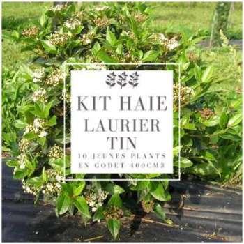 Kit Haie Laurier Tin (Viburnum