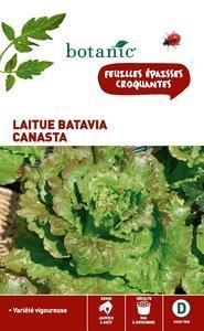 Laitue Batavia Canasta Caillard