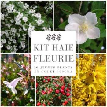 Kit Haie Fleurie - 10 Jeunes