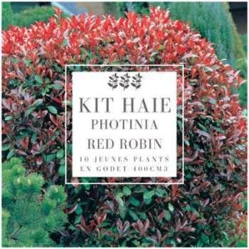 Kit Haie Photinia (Photinia