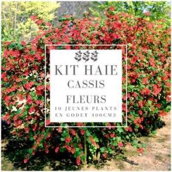 Kit Haie Cassis Fleurs (Ribes