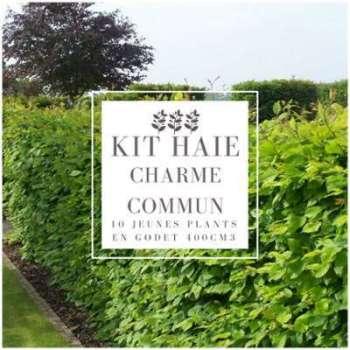 Kit Haie Charme (Carpinus
