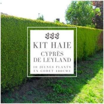 Kit Haie Cyprès De Leyland