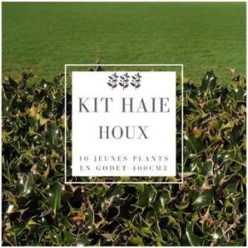Kit Haie Houx (Ilex Aquifolium)