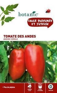 Tomate des andes (andine cornue)