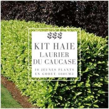 Kit Haie Laurier Du Caucase