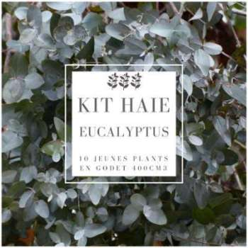 Kit Haie Eucalyptus (Eucalyptus