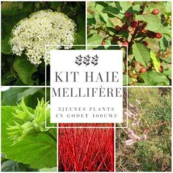 Kit Haie Mellifère - 5 Jeunes