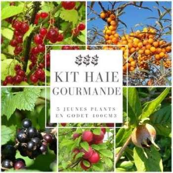 Kit Haie Gourmande - 10 Jeunes