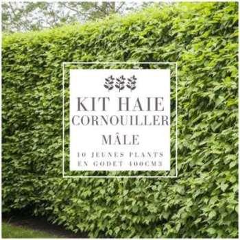 Kit Haie Cornouiller Mâle