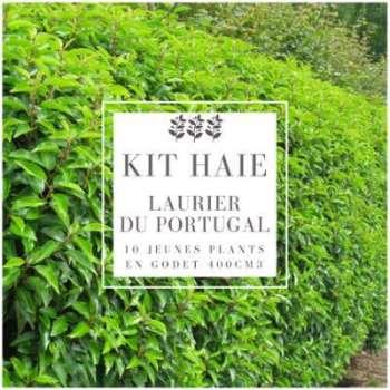 Kit Haie Laurier Du Portugal